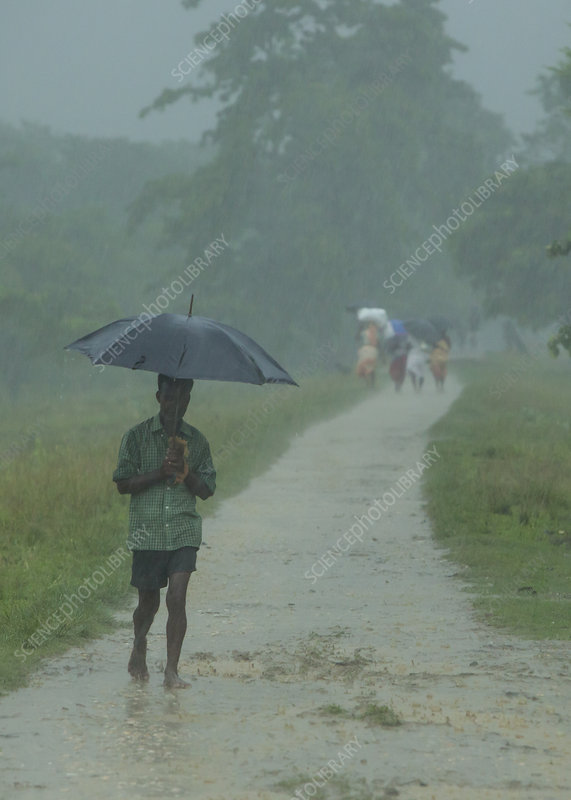 Man walking in monsoon rain with umbrella, India