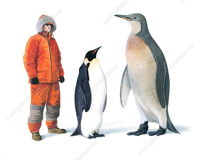 Mega Penguin with human and Emperor penguin, illustration