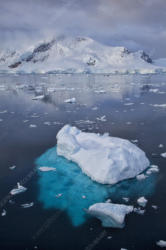 Paradise Bay with glaciers, and icebergs, Antarctica
