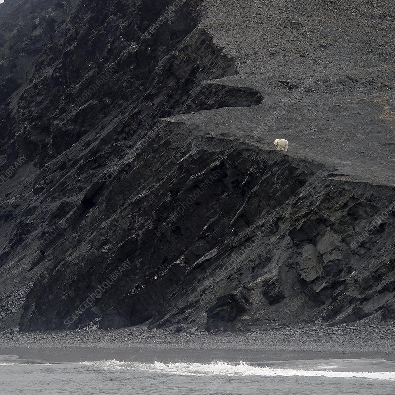 Polar bear in distance