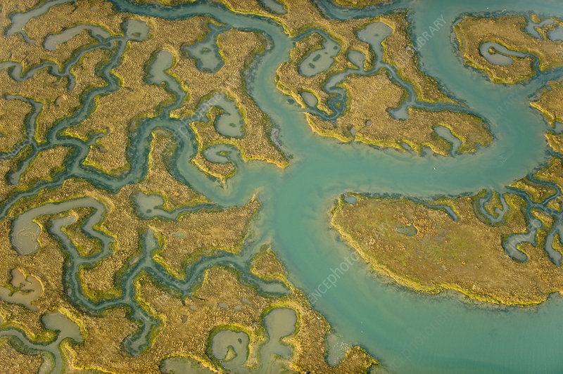 Aerial view of saltmarsh landscape, Essex, UK