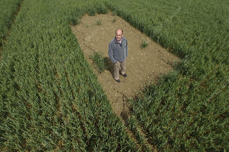 Farm manager standing in skylark plot