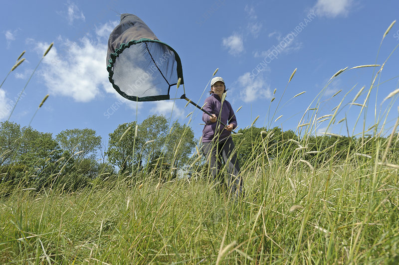 Research ecologist using sweep net