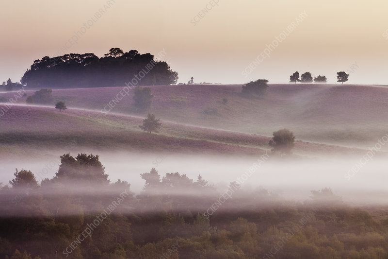 View over heathland at dawn, Hampshire, UK