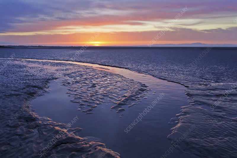 Mudflats at dawn