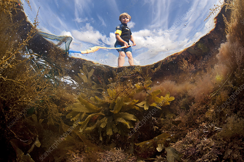 Looking up through water at boy dipping in a rock pool