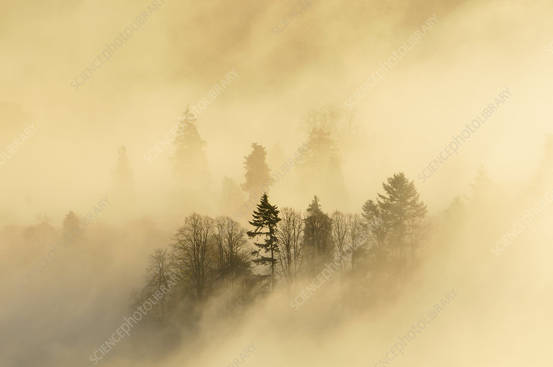 A misty morning over a mixed woodland in autum