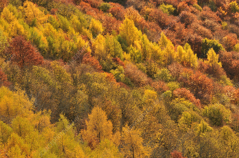Close up of colourful mixed woodland in autumn