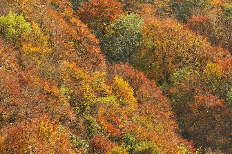 Mixed woodland in autumn colours