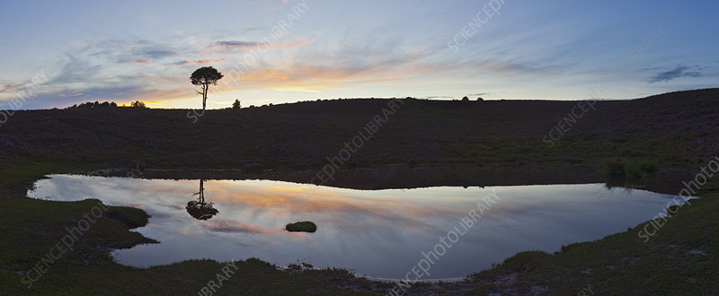 Reflections in heathland pool
