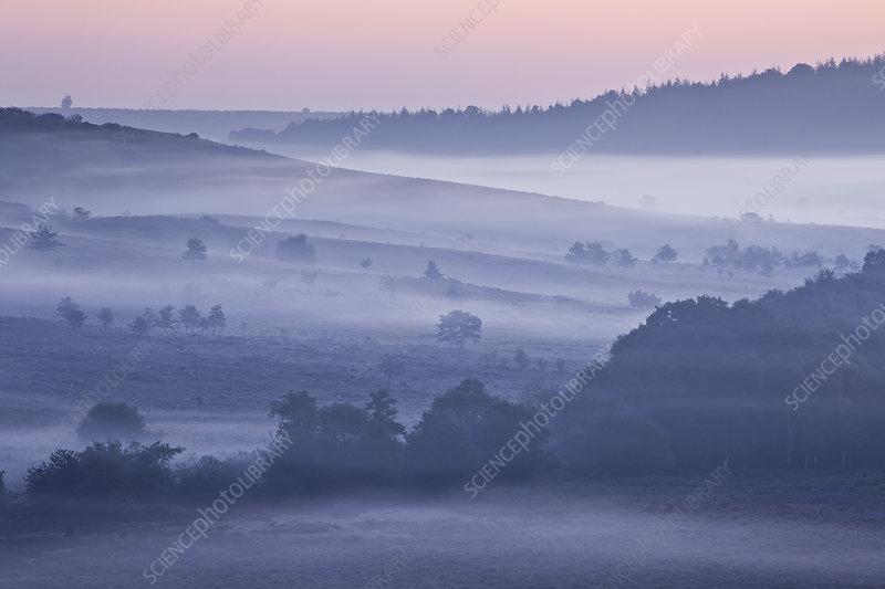 New Forest lowland heathland, Hampshire, UK