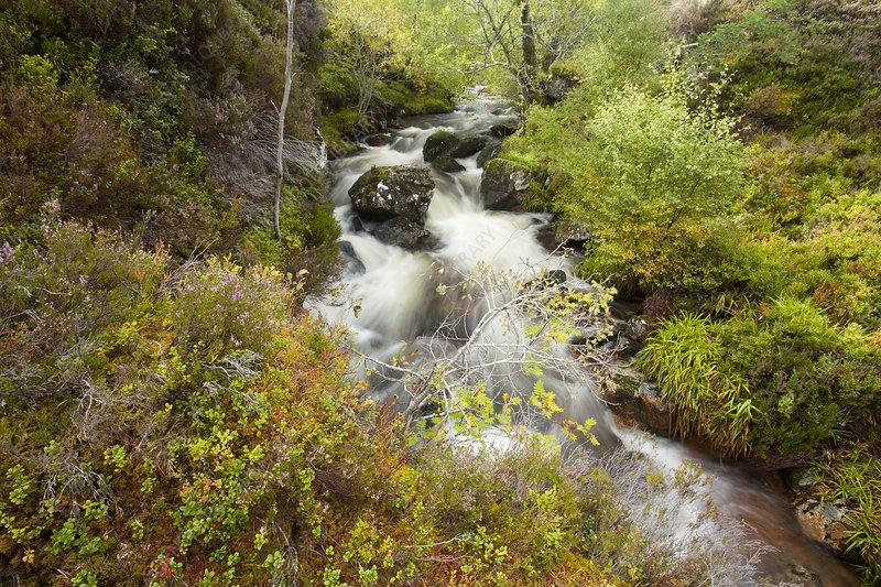 Stream running through wooded gorge