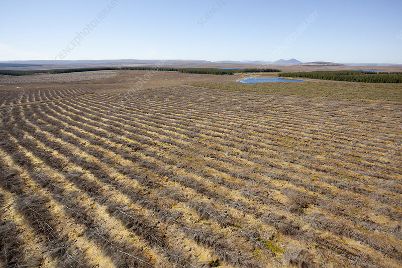 Aerial view of felled forestry plantation