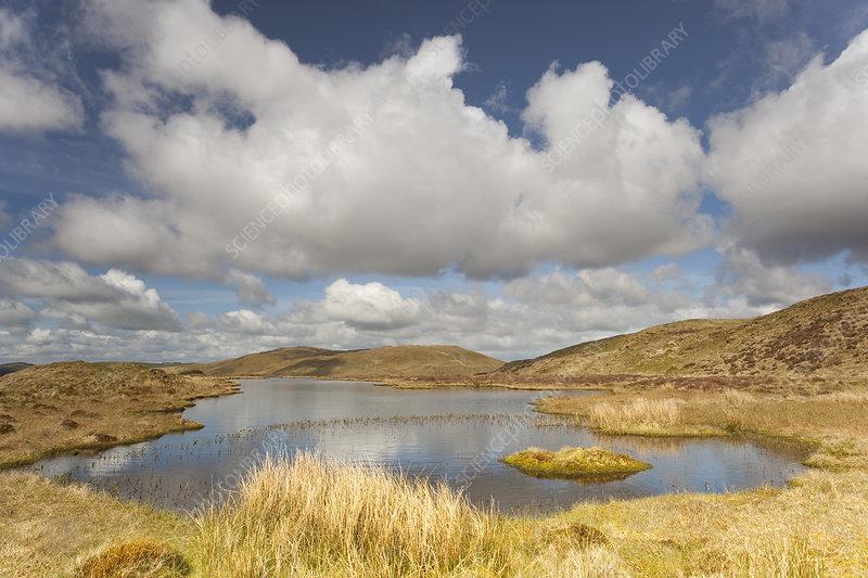 Upland peatbog pool