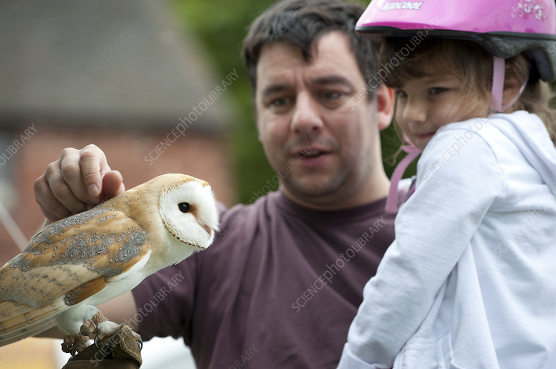 Man and child looking at Barn Owl