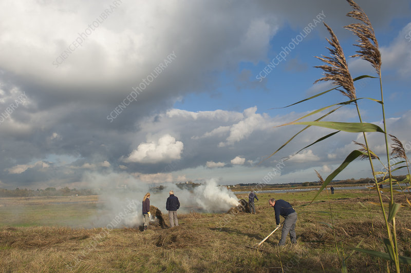 Volunteers clearing and burning vegetation