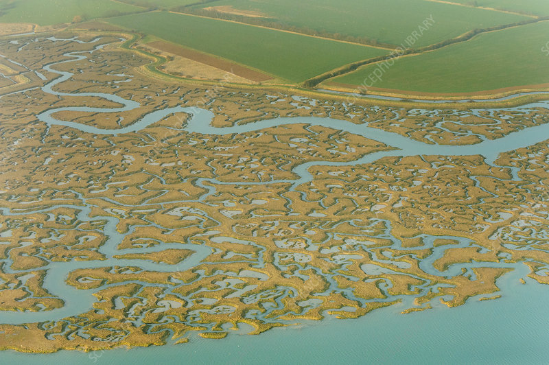 Saltmarsh and reclaimed agricultural land