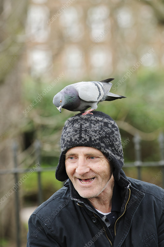 Man with Feral pigeon perched on his head
