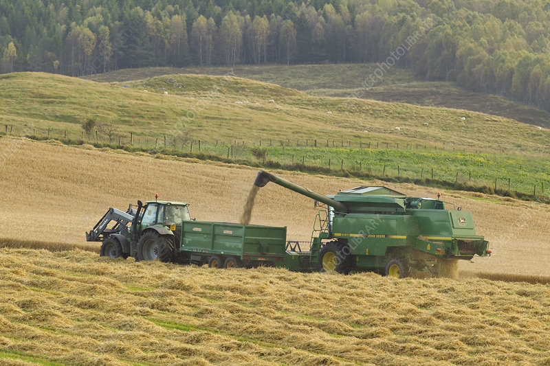 Harvesting barley crop in late summer, Scotland, UK