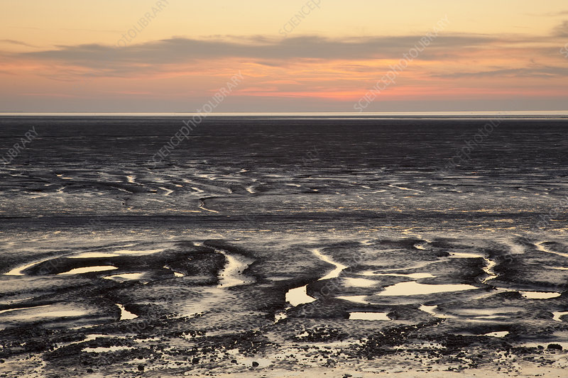 Mudflats at sunset, The Wash Estuary, Norfolk, England, UK