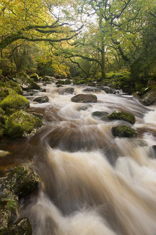 River Plym flowing fast through Dewerstone Wood, Devon, UK