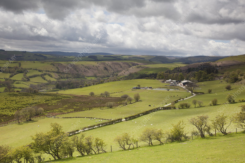Agricultural landscape in the Cambrian Mountaina, Wales, UK