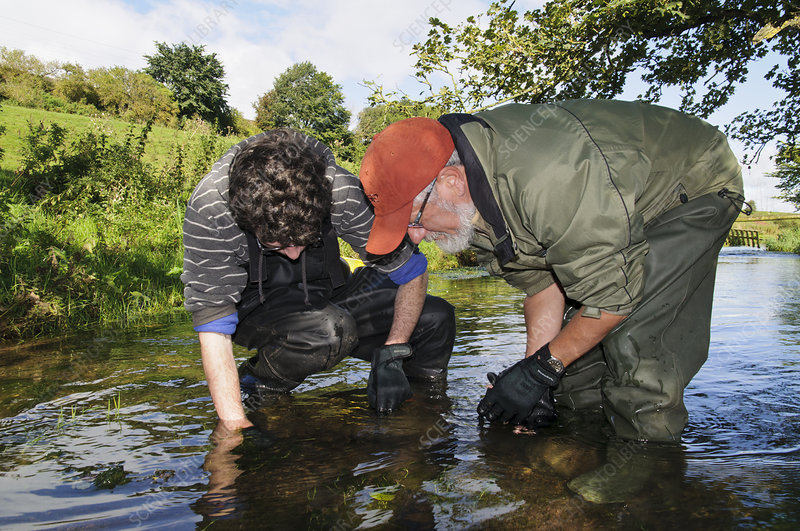 Searching for White clawed crayfish