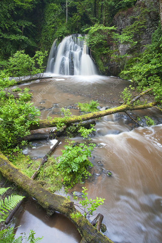 View of a waterfall with a fallen tree