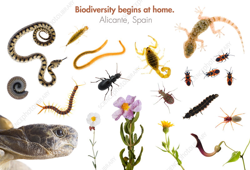 Reptiles, insects, arachnids, crustaceans and plants, Spain