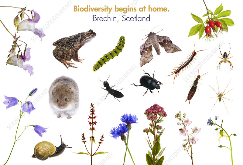 Composite of animals and plants found in Brechin, Scotland