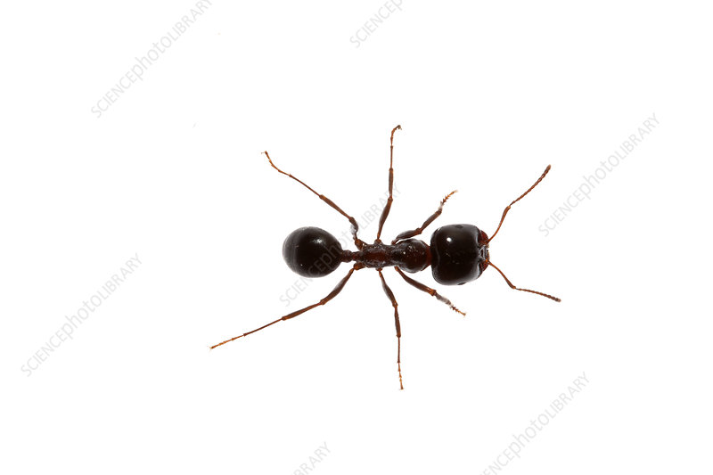 A small ant, Heraklion, Crete, Greece