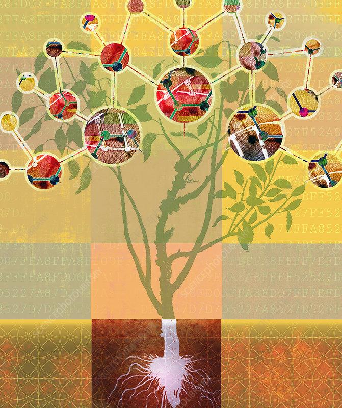Analysing molecular structure of plant, illustration