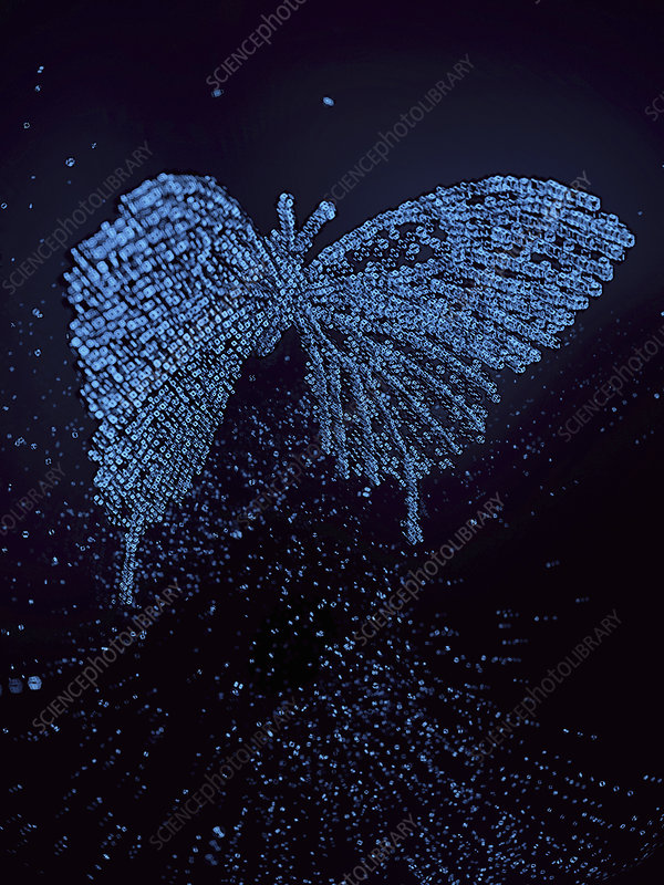 Three dimensional qubit butterfly, illustration