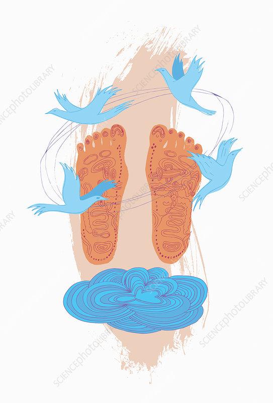Reflexology diagram on soles of feet, illustration