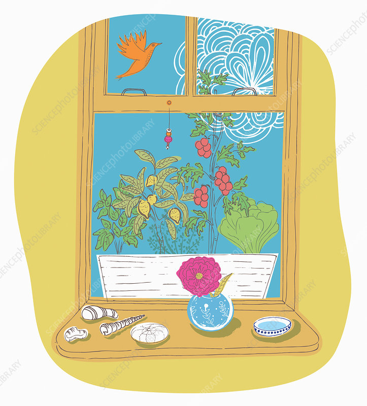 Vegetables in window box, illustration