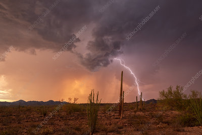 Lightning strike, Arizona, USA