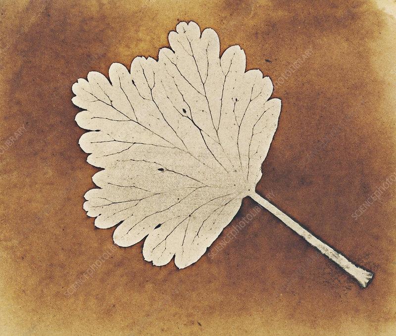 Leaf by Talbot, 1840