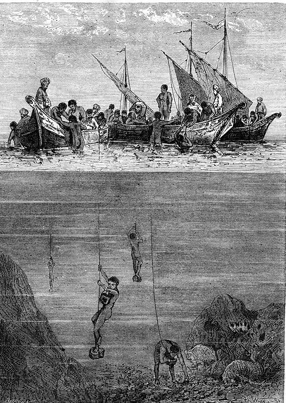 19th Century pearl divers, Indian Ocean, illustration