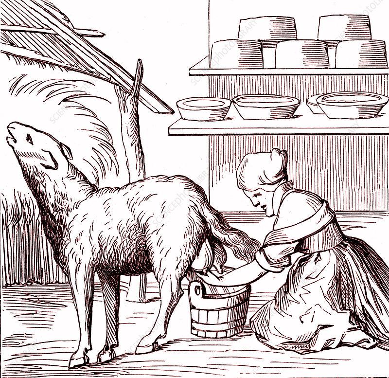 16th Century cheesemaker, illustration
