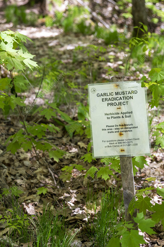 Garlic mustard eradication project sign