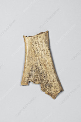 Oracle bone fragment from China, 2nd millennium BC