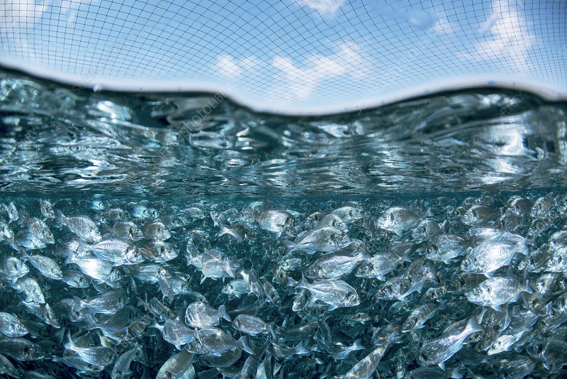 Mediterranean fish farm