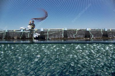 Mediterranean fish farm