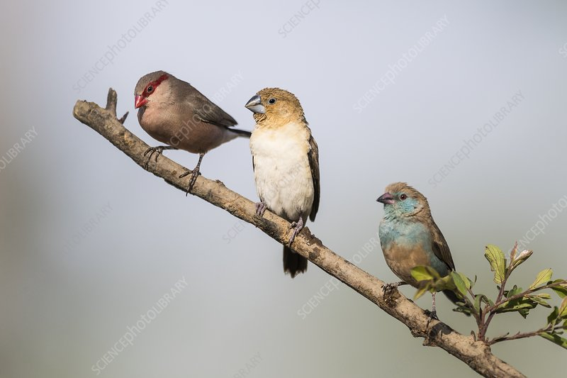 Three birds perched on branch