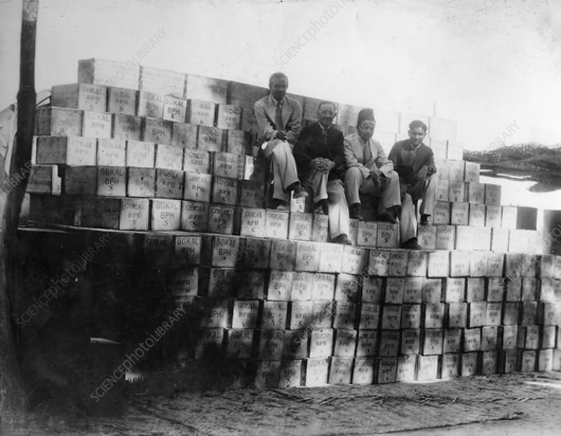 Coconut production, India, 20th century