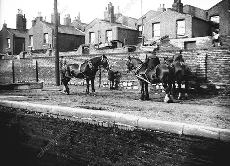 Horses resting by the side of a canal, London, c1905