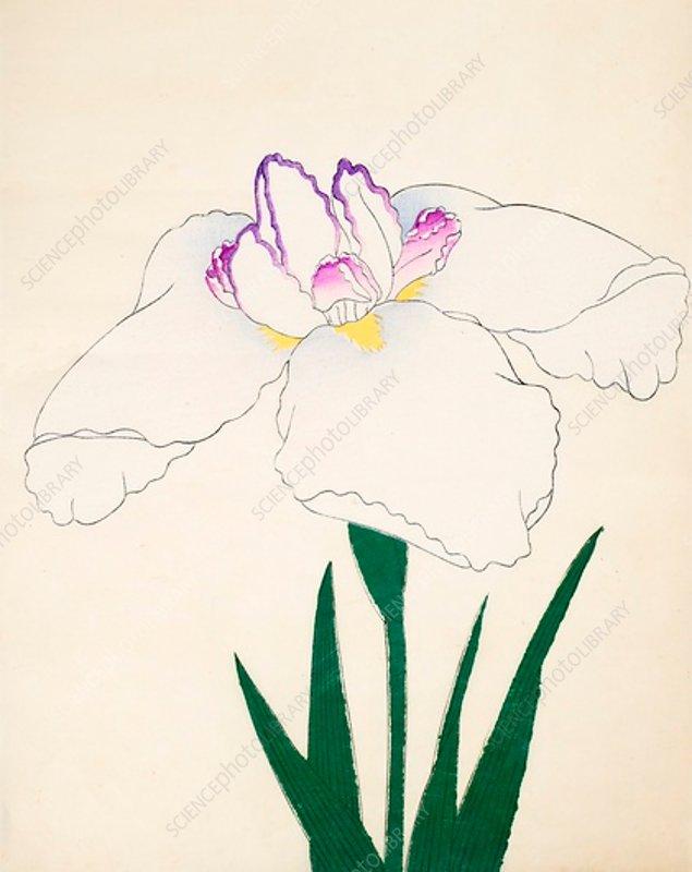 Zama-No-Mori, No 4, 1890, colour woodblock print