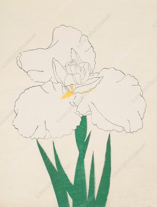 Fuji-No-Yuki, No 13, 1890, colour woodblock print