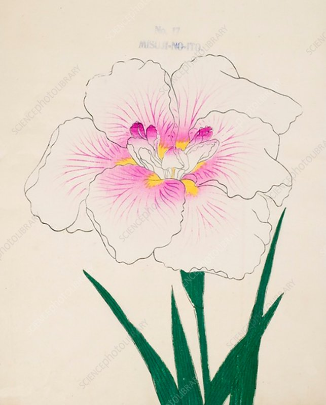 Misuji-No-Ito, No17, 1890, colour woodblock print