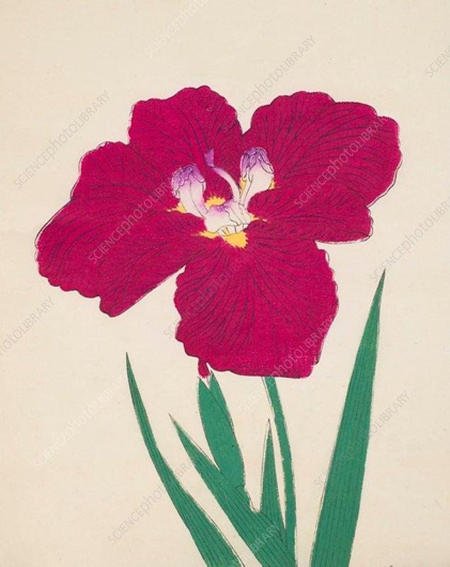Tai-Hei-Raku, No 18, 1890, colour woodblock print